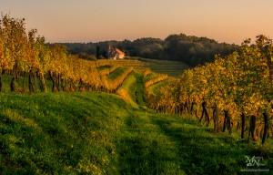 Večerni jesenski pogled z vinogradov, Placar