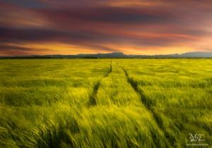 Večerna polja, Dravsko polje