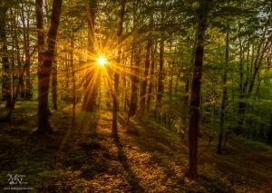 Sončna zvezda skozi gozd, Ruperče
