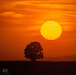 Drevo in veliko sonce