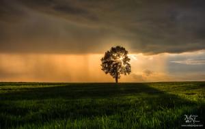 Drevo, sončna zvezda, nevihta