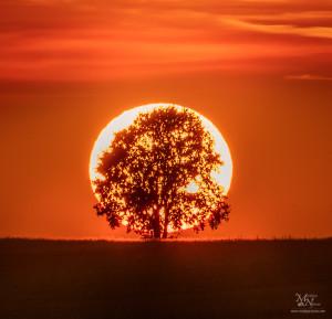 V svetlobi sonca