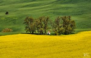 Kapela - med rumeno in zeleno