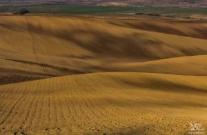 Sonce in sence - kot v puščavi