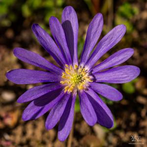 Cvet v soncu