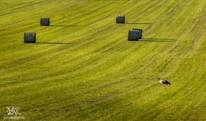 Štorklja na poletnem travniku, Podlože