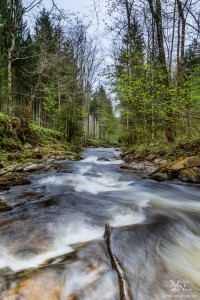 Divji potoček v gozdu, Lobnica, Smolnik