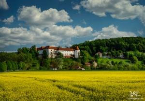 Rumena pomlad, Hrastovec v Slov.goricah