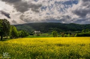 Rumeno polje, Pohorski dvor
