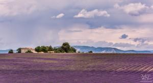 Med sivko, Plateau de Valensole