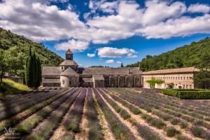 Abbaye de Senanque, opatija med polji sivke