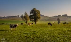 Jesensko jutro na pašniku, Zg.Partinje (Slov.gorice)