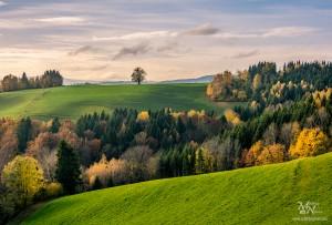 Jesenski gozd na Pohorju