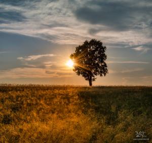 Osamljeno drevo s sončno zvezdo, Radehova