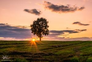 Samotno drevo s sončno zvezdo, Radehova