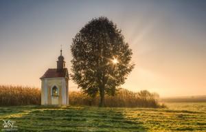 Jutranja sončna zvezda skozi drevo, Jurovski Dol