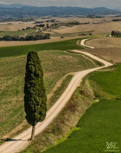 Cipresa in pot v daljavo