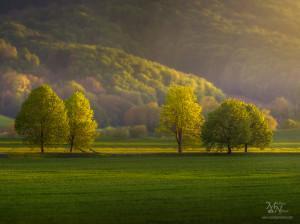 Pomladni drevored, Hrastovec