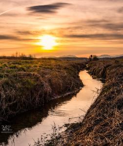 Sonce nad potočkom, Stari Log