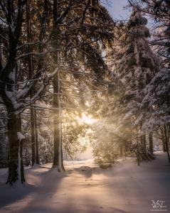 Sončna zvezda skozi gozd, Areh, Pohorje